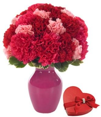 Carnations with Sweet Chocolate